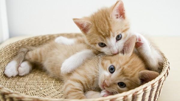 子猫の画像を取得するなら知っておきたいWEBページ