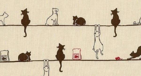 猫の種類を語るなら知っておきたい7つのこと