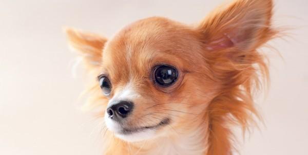 犬の名前をキラキラネームにしたい人へ知ってほしいこと