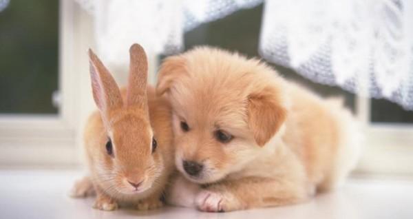 ウサギとかわいい子犬