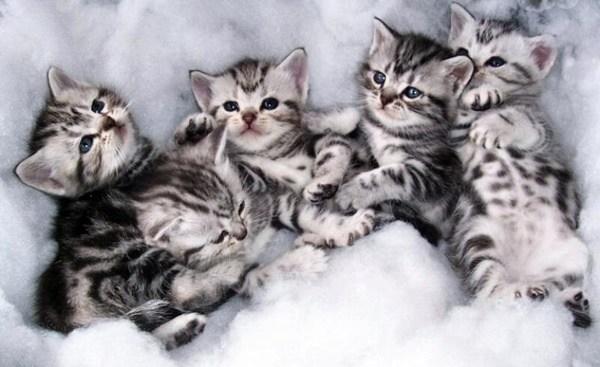 子猫の画像をとるなら絶対必要な5つのグッズ