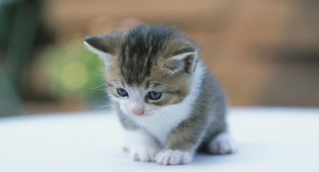 子猫の里親探しなら動物病院へ。その5つの理由