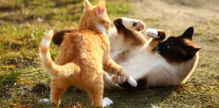 猫の鳴き声で心の声がわかる7つの方法