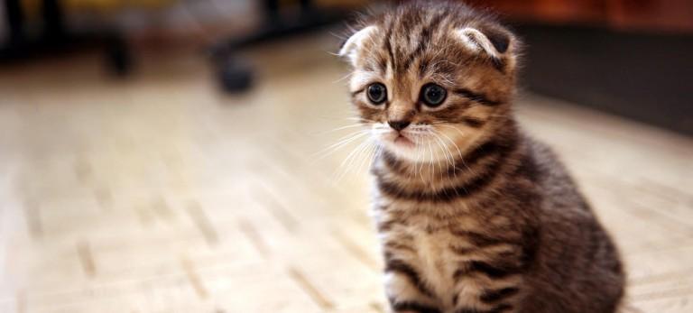 猫カフェ初デート☆猫好きな彼女を楽しませる方法