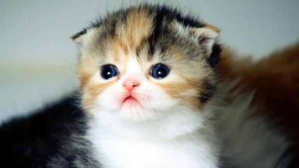 猫を飼う前の心構えや責任等、理解しておきたいポイント