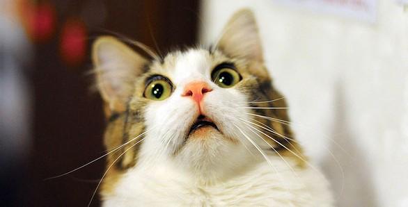 猫の画像の集め方☆いちばんのおすすめはこれ!
