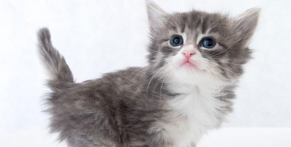 子猫の育て方★知らなかった子猫のあるある