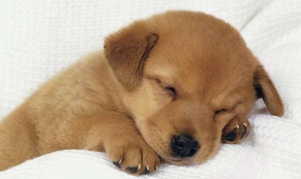 犬のしつけが下手な人に共通する7つのこと