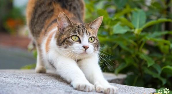 猫の年齢を知るときにしっておくべき基本事項