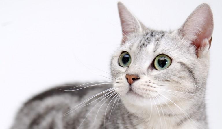 猫耳画像☆マニアックなものだけ9枚集めました。