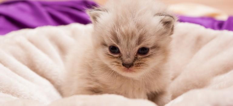 猫耳好きなあなたへの7つの雑貨集