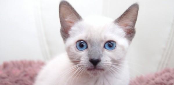 可愛い猫画像をひたすら集めてみました。