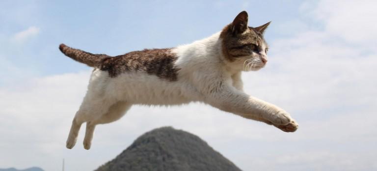 猫の画像を見て病気を学ぶ!気づきづらいチェックポイント