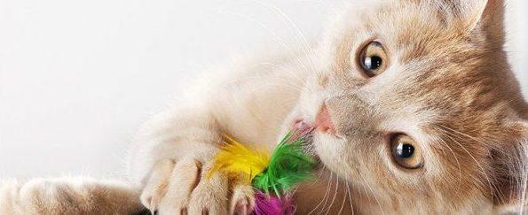 猫のおもちゃ購入に欠かせない5つのネットショップ