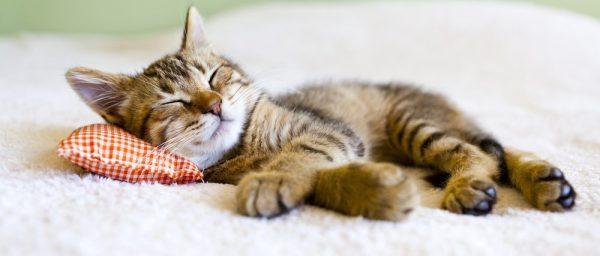 猫って超かわいい☆お気に入りが絶対見つかる7つの画像