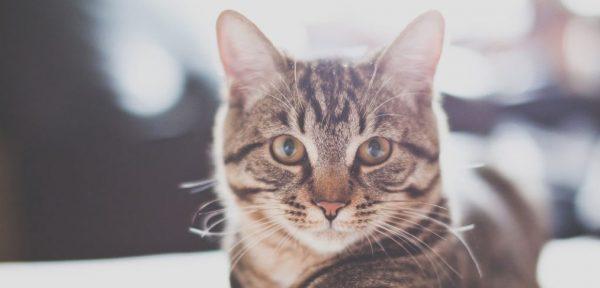 猫を留守番させたときに困ったこと、7つの経験談
