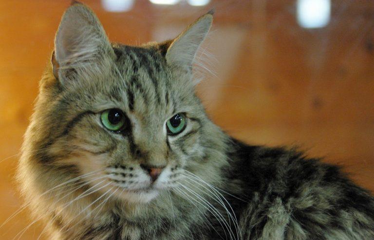 可愛い猫画像♪癒されたいあなたへのおすすめはこれ!