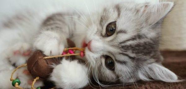猫のしつけがうまくいかない理由