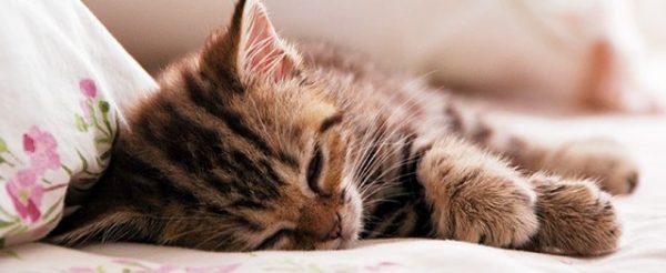 三毛猫などのスタンダードな猫ばかりをご紹介