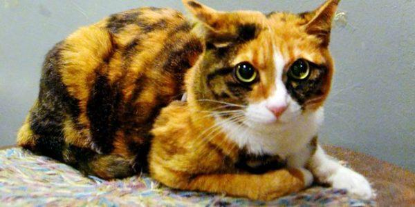 三毛猫の性格を知って明日から楽しく暮らす7つの方法
