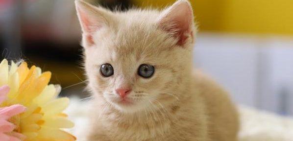 猫に留守猫に留守番してもらうときに準備しておくべきこと番してもらうときに準備しておくべきこと