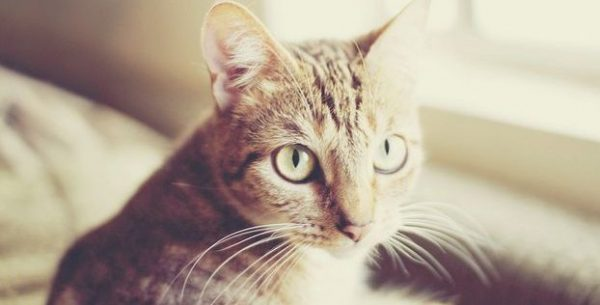 かわいい猫画像ならこれを見よ!究極の7枚
