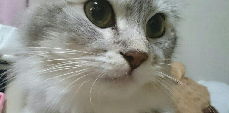 猫の鳴き声の意味を知ればより楽しめる7つの会話術