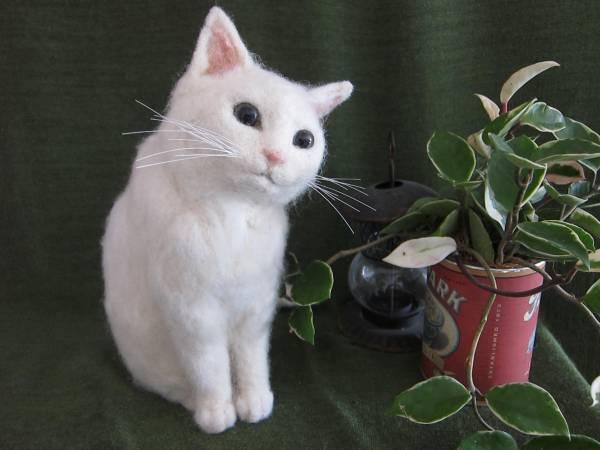 白猫を飼えない人のための11つの画像集