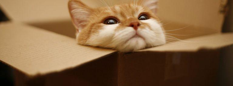 PCの壁紙はやっぱ猫でしょ。おすすめ画像11選★