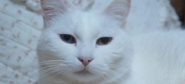 白猫を飼う前に見ておきたい画像集