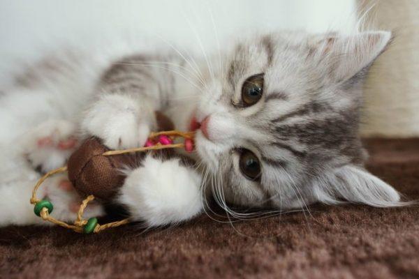 可愛い猫7