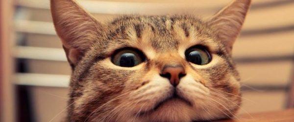 猫の鳴き声を徹底解剖してみました
