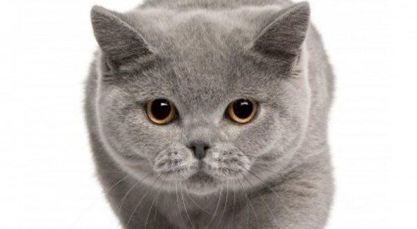 一人暮らしの人がペットを飼うなら絶対おすすめの7種