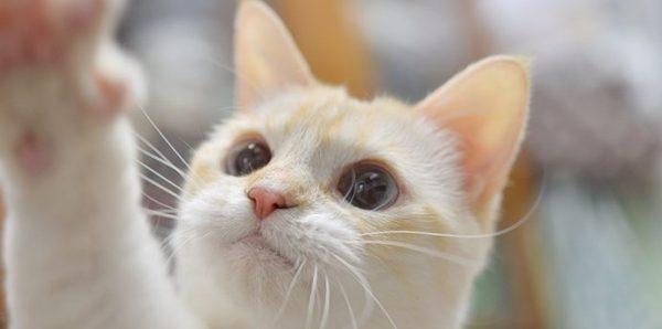 猫パンチはどんな時にする?知っておきたい猫の気持ち