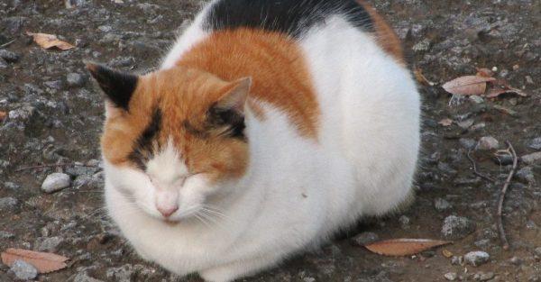 三毛猫好きにはたまらない7画像