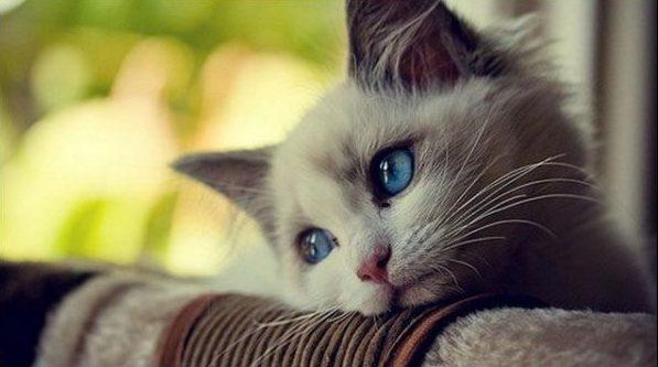 可愛い猫6