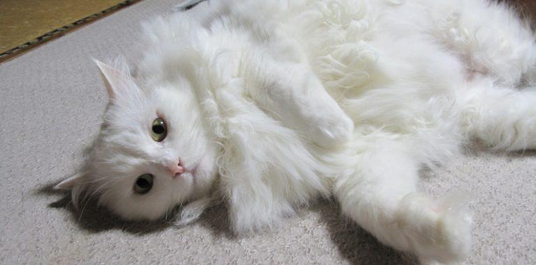 白猫好きにはたまらない11画像