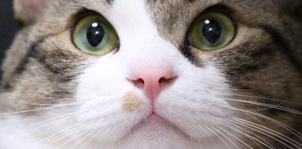 おもしろ猫画像。これを見なくちゃ始まらない7つの画像