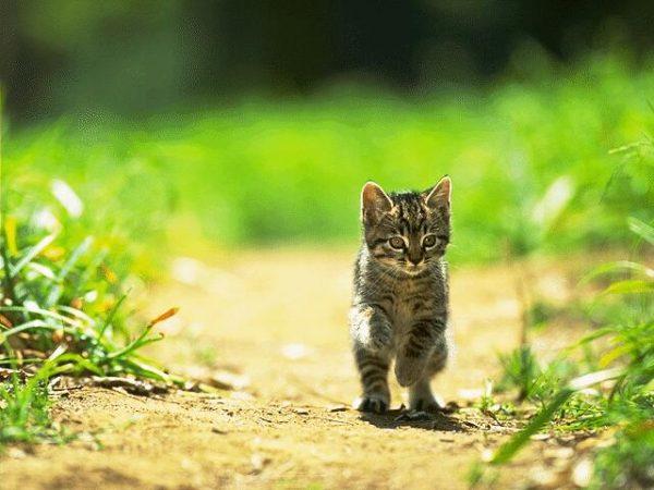 可愛い猫2