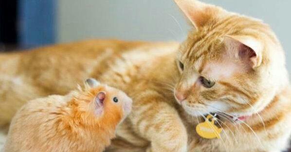 癒される☆可愛い猫ばかり集めた11画像