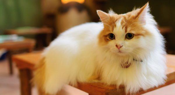 猫の鳴き声からわかる7つの大切な訴え。