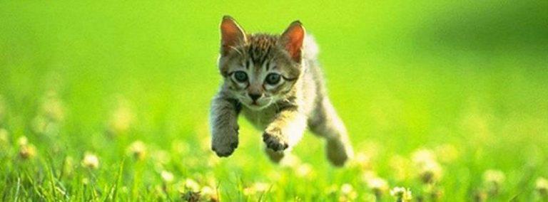 子猫を拾う前に備えておきたい5つの環境
