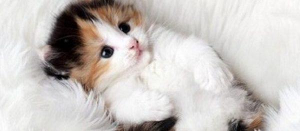 youtubeの猫画像撮るなら用意しておくべき小道具