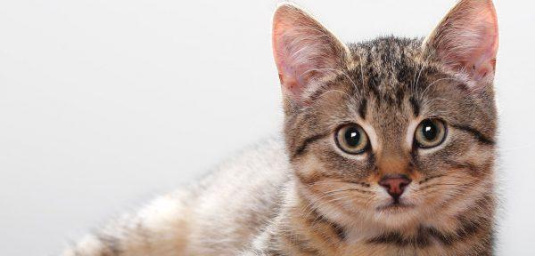 捨て猫を保護した後に行ってほしい5つのこと