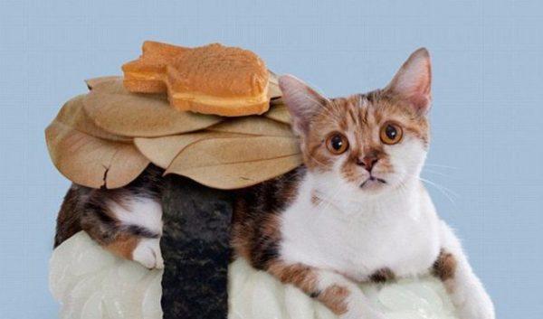 でかい猫を飼ってるなら。気を付けたい病気の種類