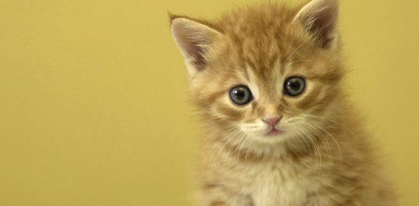 子猫を拾ったら☆まず初めにやるべきこと