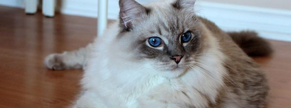 猫のゴロゴロや気持ちを理解する5つの方法
