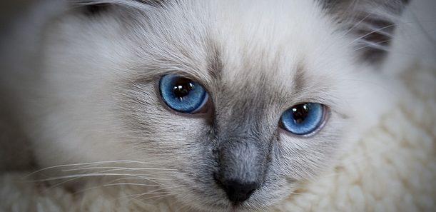 猫のストレスを緩和させるための5つの方法