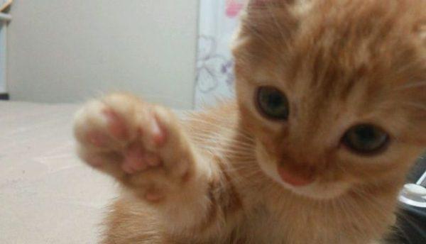 猫ちゃんが猫パンチするときの心理状態とは?