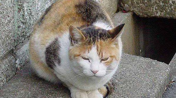 三毛猫好きなら絶対見てほしい7画像